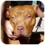 Photo 3 - American Pit Bull Terrier Mix Dog for adoption in Berkeley, California - Punkin