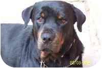 Rottweiler Dog for adoption in Folsom, Louisiana - Ludwig