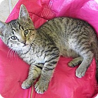 Adopt A Pet :: Ben - Mobile, AL