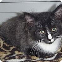 Adopt A Pet :: Fuzzby - St. Petersburg, FL