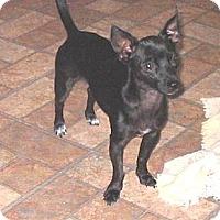 Adopt A Pet :: Spike - Chandler, AZ