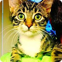 Adopt A Pet :: Beckett - Green Bay, WI