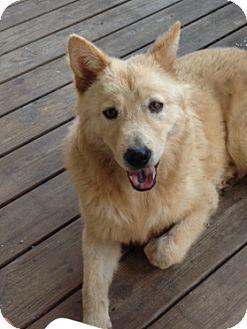 German Shepherd Dog Mix Dog for adoption in Decatur, Georgia - Max AKA Hi