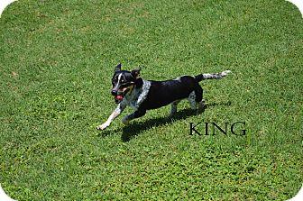Terrier (Unknown Type, Medium) Mix Dog for adoption in Texarkana, Arkansas - King