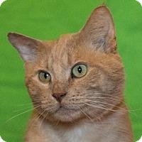 Adopt A Pet :: Klein - Calgary, AB