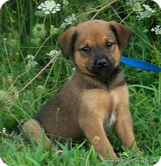 German Shepherd Dog Mix Puppy for adoption in parissipany, New Jersey - Mia~ADOPTED