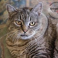 Adopt A Pet :: Petunia - Belton, MO