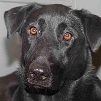 Adopt A Pet :: Amazon - Rossville, TN