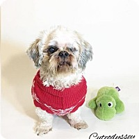 Adopt A Pet :: Callisto - San Diego, CA