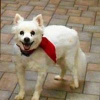 Adopt A Pet :: Abram - St. Louis, MO