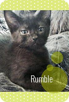 Domestic Mediumhair Kitten for adoption in Meridian, Idaho - Rumble