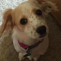 Adopt A Pet :: Marley - justin, TX