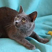 Adopt A Pet :: Tatiana - Spring Valley, NY