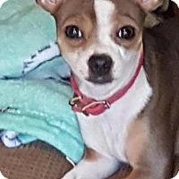 Adopt A Pet :: Ellie - Orlando, FL