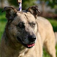 Adopt A Pet :: Molly - St. Charles, MO
