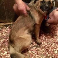 Adopt A Pet :: Zen - Fairfax Station, VA