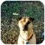Photo 4 - Shar Pei Dog for adoption in Houston, Texas - Mia