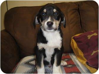 Shepherd (Unknown Type)/Husky Mix Puppy for adoption in Barron, Wisconsin - Shepard Puppy #7