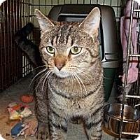 Adopt A Pet :: Hopkins - Acme, PA