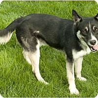 Adopt A Pet :: Rover - Chicago, IL