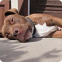 Adopt A Pet :: Chuck - San Diego, CA