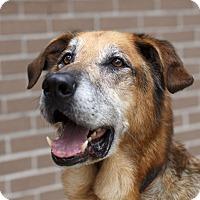 Adopt A Pet :: Rocky - Rigaud, QC