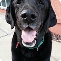 Adopt A Pet :: Tuco - Torrance, CA