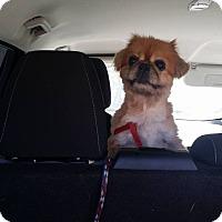 Adopt A Pet :: HARVEY - SO CALIF, CA