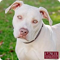 Adopt A Pet :: Whitey - Marina del Rey, CA