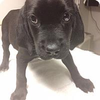 Adopt A Pet :: Buster - St. Louis, MO