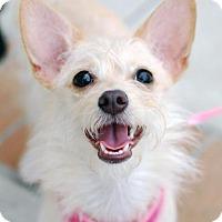 Adopt A Pet :: Flower - Madison, AL