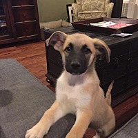 Adopt A Pet :: Jade - Greeneville, TN