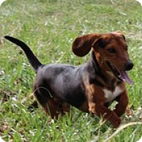 Adopt A Pet :: Zaxby - Staunton, VA