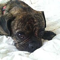 Adopt A Pet :: Baxter - Eagle, ID