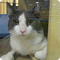 Adopt A Pet :: Hoitt - Temple, PA