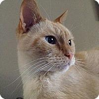 Adopt A Pet :: Gilford - Cincinnati, OH