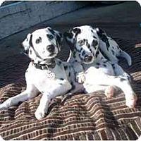 Adopt A Pet :: Bunker - League City, TX
