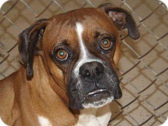 Boxer Dog for adoption in Thomaston, Georgia - Marlene