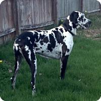 Adopt A Pet :: Gracie - York, PA