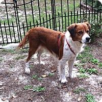 Adopt A Pet :: Annie - Columbia, SC