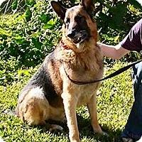 Adopt A Pet :: SHADOW-17 - Lithia, FL