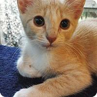 Adopt A Pet :: Maxine - Mount Pleasant, SC