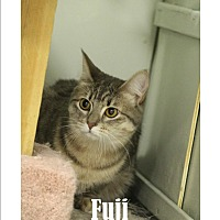 Adopt A Pet :: Fuji and Everest - Mission, BC