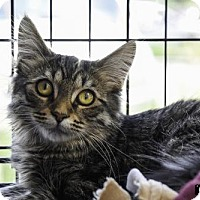 Adopt A Pet :: Benni - St Paul, MN