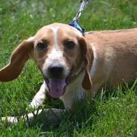 Adopt A Pet :: Madden - Fairfield, OH