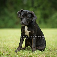 Adopt A Pet :: June - Southbury, CT