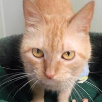 Adopt A Pet :: Zoey - Clearfield, PA