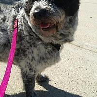 Adopt A Pet :: Zorra - Burbank, OH