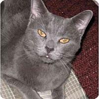 Adopt A Pet :: Grayson - LUVbug - Cincinnati, OH