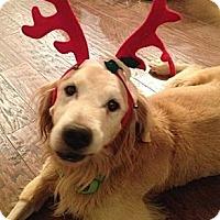 Adopt A Pet :: Max - Danbury, CT